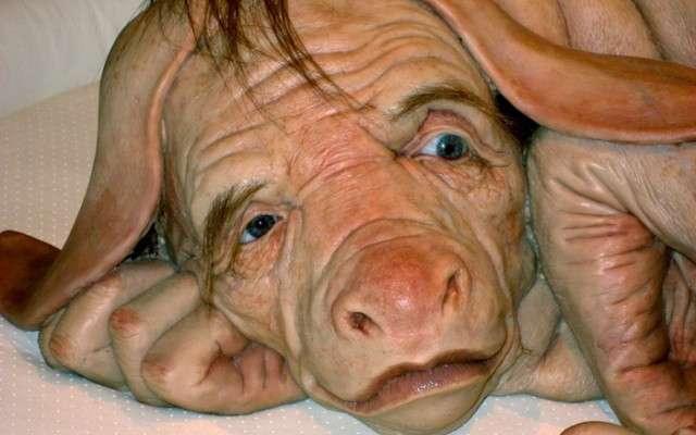 Франкенштајн-лабораториите работат турбо: создаден човек-свиња