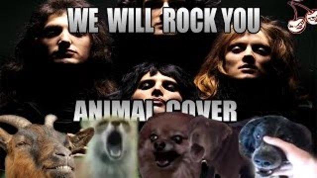 zhivotnive-go-otpeaja-golemiot-hit-na-grupata-kvin-we-will-rock-you
