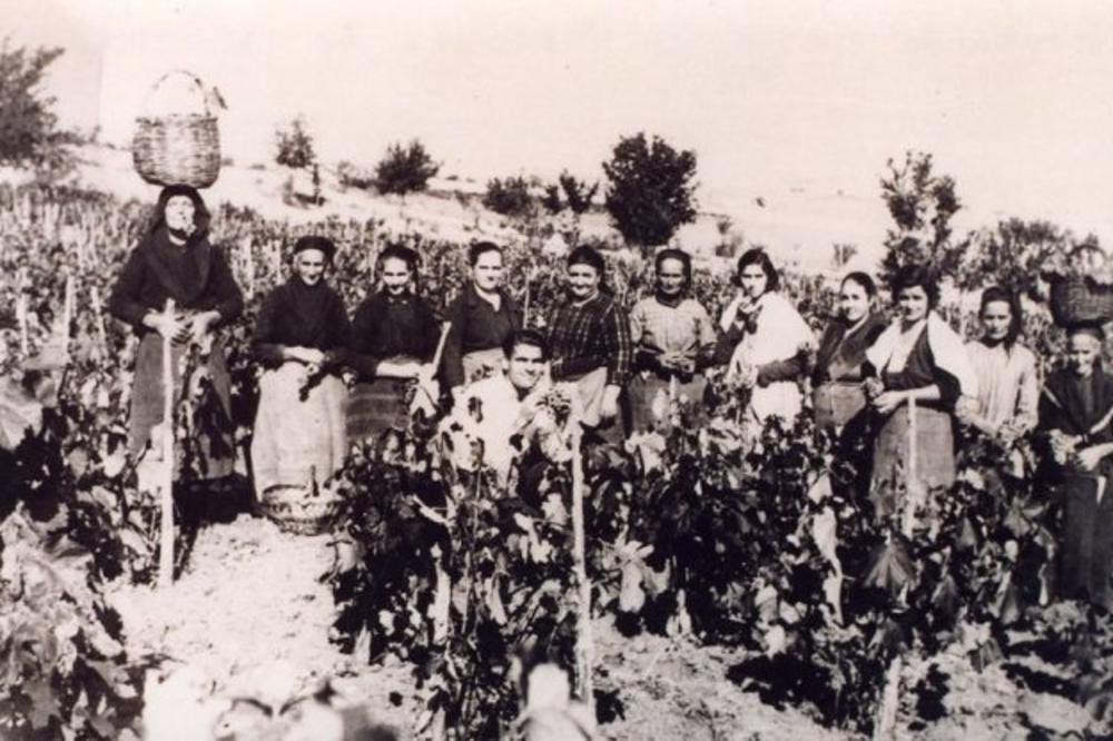 selfi-vo-kavadarechko-lozje-od-1928-godina